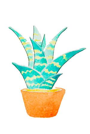 Green home plant in a flowerpot cartoon  Illustration
