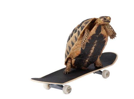 fast forward: Fast tortoise Stock Photo