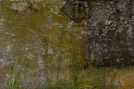A very old moldy deteriorated and dirty, swollen concrete wall background outdoors with green mold on it and grass growing around