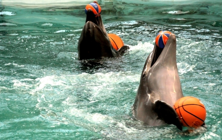 profundity: dolphins with ball in pool Stock Photo