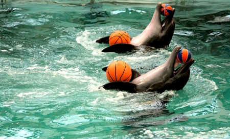 profundity: dolphins with four balls in pool
