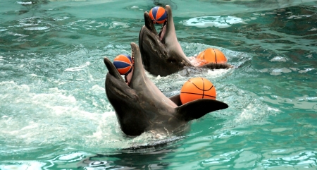 profundity: dolphins play with four balls in pool