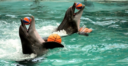 profundity: two dolphins keeps balls in herd