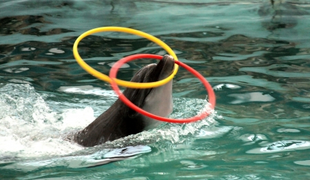 profundity: dolphin in pool with two hoops Stock Photo