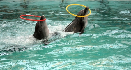 profundity: two dolphins in pool with two hoops Stock Photo