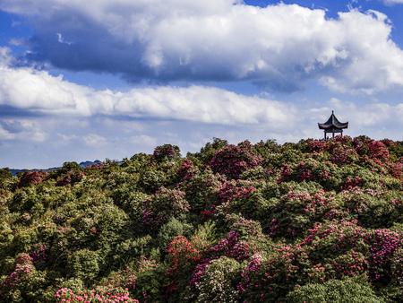China Guizhou Province, Bijie City, Baili Azalea scenic area, Baili Huahai 版權商用圖片