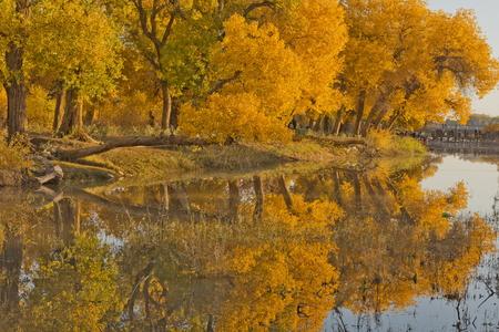 Luntai Huyang Poplar Forest Park presso la Mongolia Inner Mongolia. Archivio Fotografico - 81344711