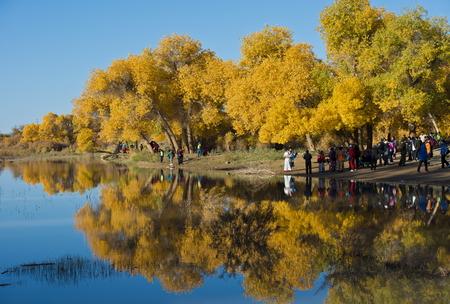 Luntai Huyang Poplar Forest Park at China Inner Mongolia.