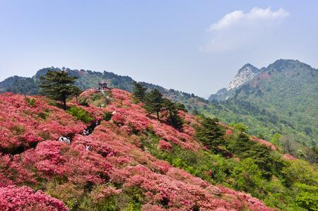 spot: Guifeng Mountain Scenic Spot