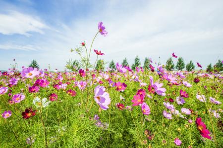 Chinese Hebei, Zhangjiakou City, Guyuan County, streaky meadow