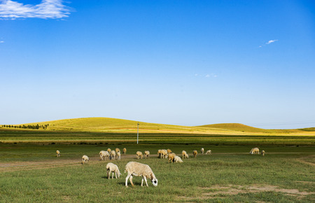 Chinese Inner Mongolia Grassland landscape view