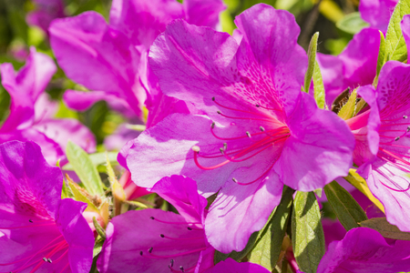 Close up view of pink flower Stock Photo