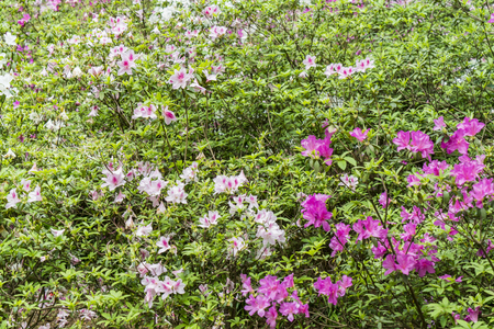 pink flowers at garden Stock Photo