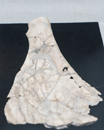 Western Zhou Dynasty divination bone at Shanxi Museum Editorial
