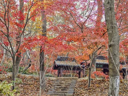 The autumn scenery in  Jiangsu, Nanjing, Qixia, China