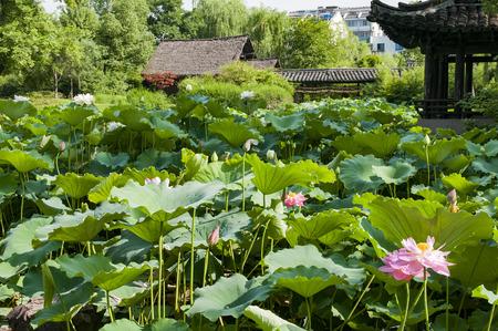 Shenyuan Scenic Area at Zhejiang province, China.