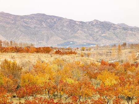 Yangyuan Autumn farmland