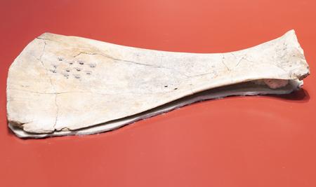 China, Henan Province, Anyang Yinxu Museum, collection of cultural relics, Shang Dynasty, Bu Gu