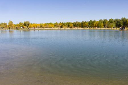Gansu, Jiuquan City, Jinta County, Desert Forest Park 版權商用圖片 - 115911766