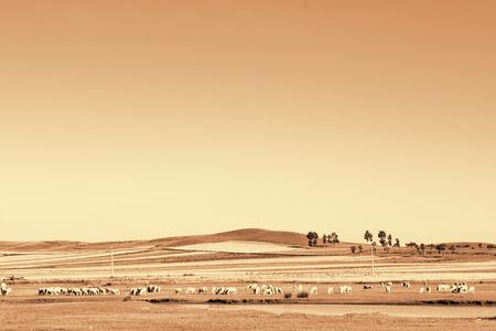 Xilamur scenery in Inner Mongolia, China. Фото со стока
