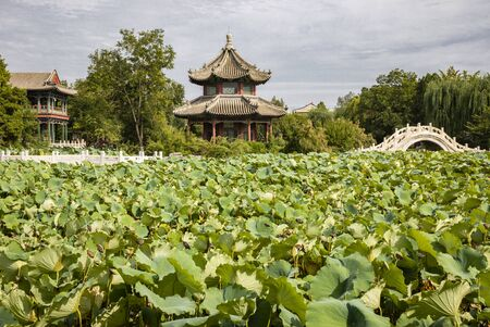 Ancient Lotus Pond in Baoding City,Hebei Province, China.