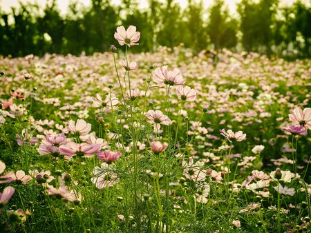 pink flowers at Weihe Wetland