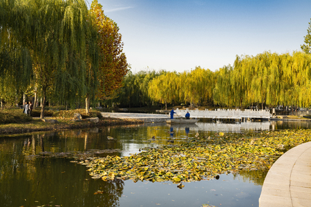 China, Hebei Province, Shijiazhuang City, Hebei University of Economics and Business, campus autumn