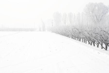 Luliang City rural Snow at Wenshui County, Shanxi Province, China.