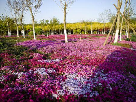 Hutuohe Wetland Park, Shijiazhuang City, Hebei Province, China