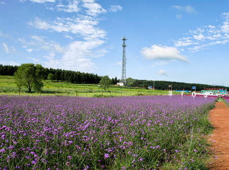 China, Hebei Province, Zhangjiakou City, Zhangbei County, Grassland Tianlu Scenic Area, Lavender Sajtókép