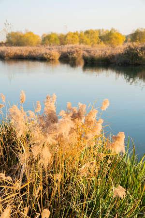 China, Hebei Province, Shijiazhuang City, Zhengding County, Futuo River Wetland Park