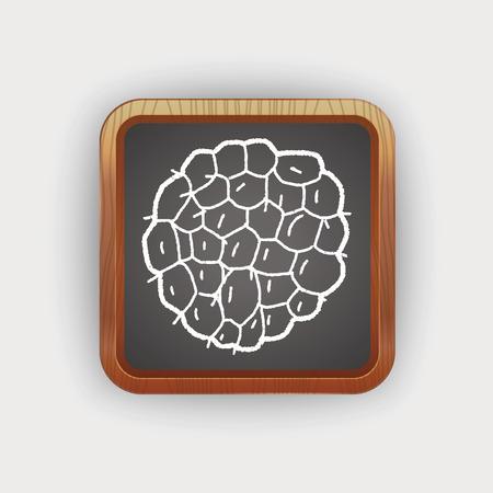custard: Custard apple doodle