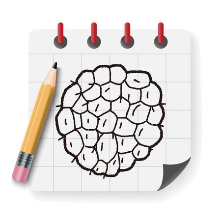 rambutan: Custard apple doodle