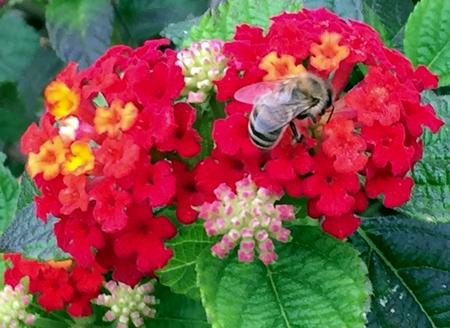 december: December Bee
