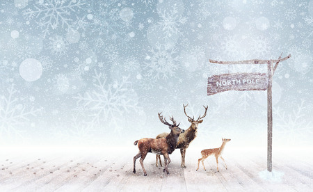 Deer arriving at the north pole 3D Rendering