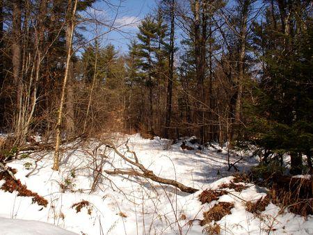 Fallen Log in Snow Stock Photo