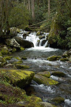 Forest of River Rocks Stock fotó