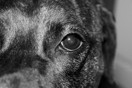 incognito: Canine Incognito