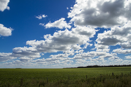 field planted with soybeans and cloudy sky photo