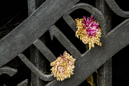 entrance arbor: pinned flowers on a trellis Stock Photo