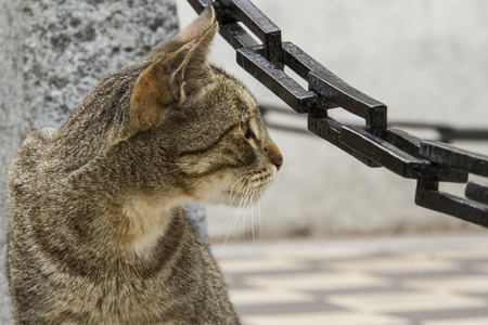 looking aside: brown cat looking aside with a pilot and chains background Stock Photo