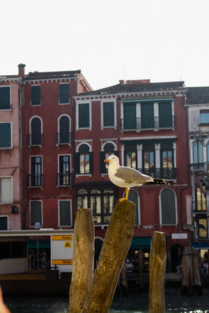 grand canal: Seagull on a pole in the Grand Canal in Venice