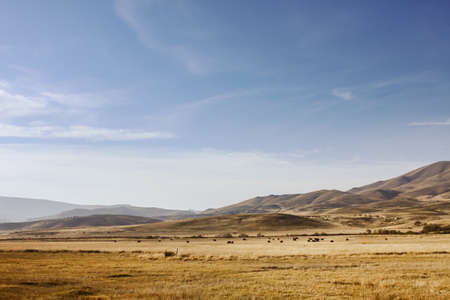 Patagonian steppe in Neuquen, Argentina, near the Andes.
