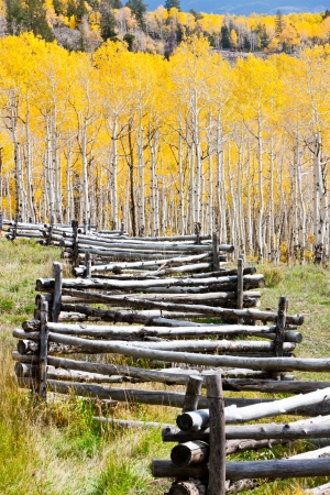 Wooden Fence Line Leads to Fall Aspen photo