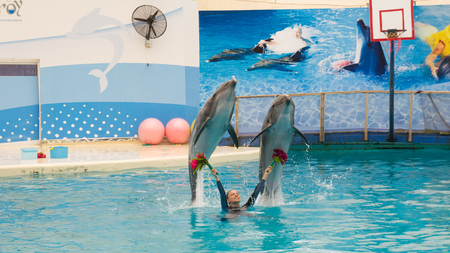 troy: BELEK, TURKEY - OCTOBER 04, 2014: Dolphins show, Troy Dolphinarium. Two bottlenose dolphins show amazing tricks Editorial