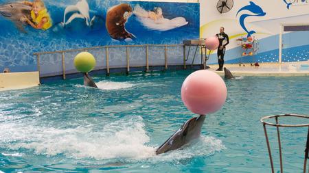 bottlenose: BELEK, TURKEY - OCTOBER 04, 2014: Dolphins show, Troy Dolphinarium. Two bottlenose dolphins playing with balls