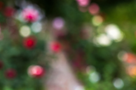 Defocused abstract texture background of garden with flowers for your design
