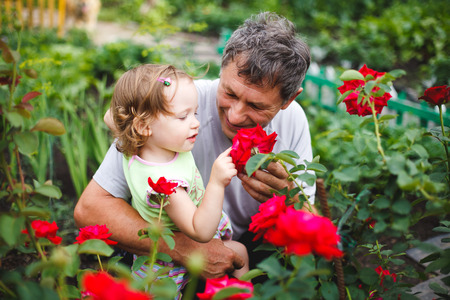 grandad: Cute little girl touching flower with grandfather in garden of roses Stock Photo