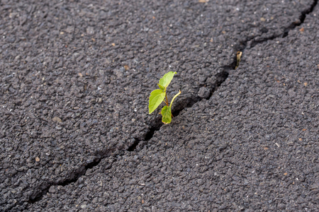Green sprout, plant on gray cracked ground asphalt, leader concept