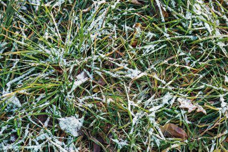 Frozen green grass after night frost in autumn, nature background Standard-Bild - 134136260